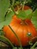 Sixtrouille